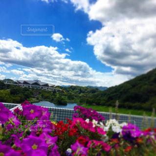 花と青空の写真・画像素材[1002563]