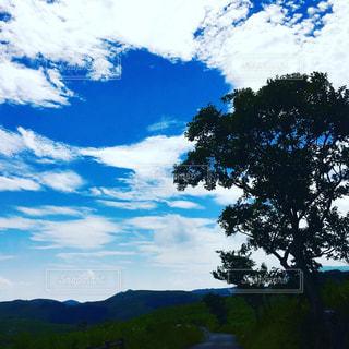 青空と木の写真・画像素材[1008040]