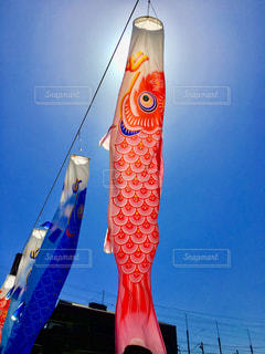 青空を泳ぐ鯉のぼりの写真・画像素材[1139516]
