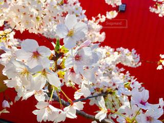 近くの花のアップの写真・画像素材[1882593]