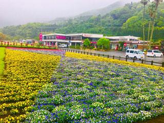 鹿児島県 石田湖にある花畑の写真・画像素材[2093041]