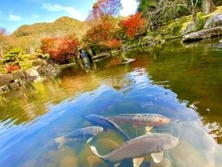 水の池のクローズアップの写真・画像素材[2731814]