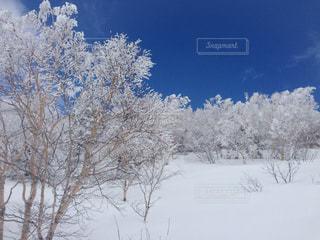 雪に覆われた木の写真・画像素材[1001811]