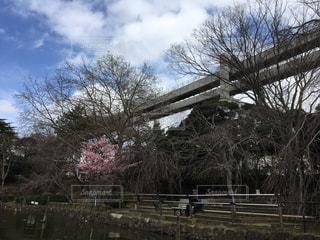 モノレールと樹木の写真・画像素材[1055533]