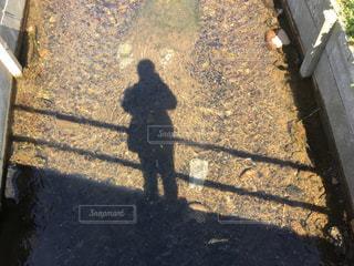 水に映る影の写真・画像素材[1055537]