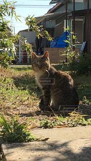 庭に座っている猫の写真・画像素材[1055542]