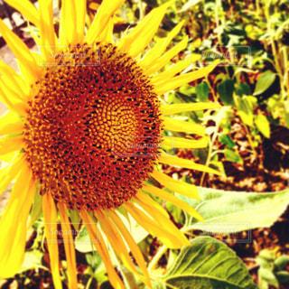 近くの花のアップの写真・画像素材[1021936]