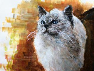 見上げる猫の写真・画像素材[1002492]