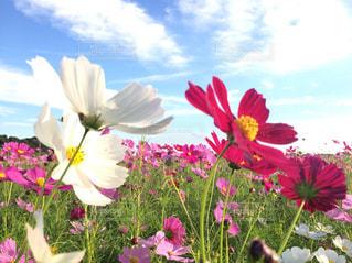 色とりどりの花の花瓶の写真・画像素材[1003243]