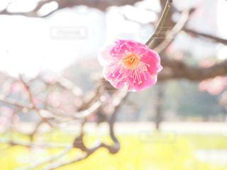 植物にピンクの花の写真・画像素材[1002547]