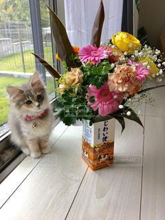 花束と子猫の写真・画像素材[1002567]