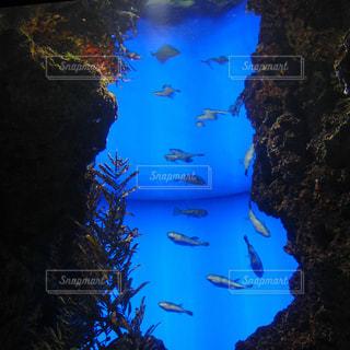 水族館 海響館の海底の写真・画像素材[1003267]