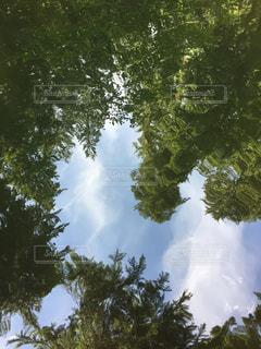 水面に映る緑の写真・画像素材[1003039]