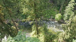 フォレスト内のツリーの写真・画像素材[1003042]
