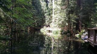 森林を流れる川の写真・画像素材[1003043]