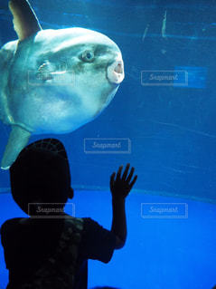 魚と目が合った瞬間の写真・画像素材[1003195]