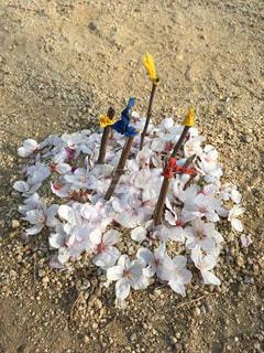 散った桜を集めて。の写真・画像素材[1102636]