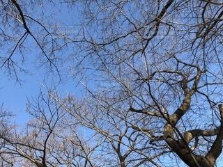 冬の空の写真・画像素材[1008909]