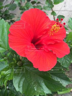 近くの花のアップ - No.1004245