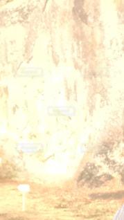 金色の光の写真・画像素材[1006814]