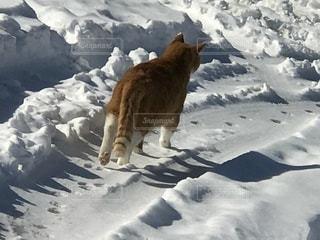 雪の中の散歩の写真・画像素材[1007422]