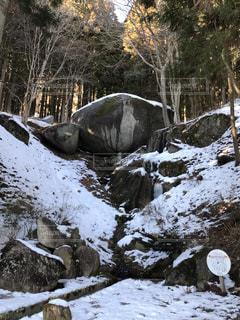 古代亀石の写真・画像素材[1007623]