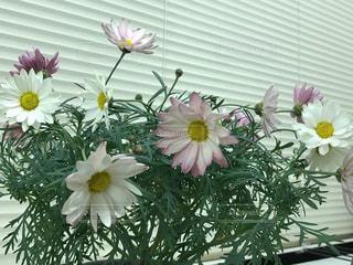 黄色い花の上に座って花の花瓶 - No.1009341