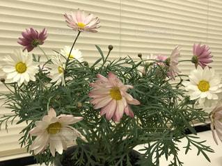 テーブルの上に鉢植えの花 - No.1009342