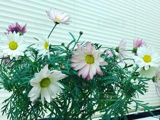 テーブルの上に鉢植えの花 - No.1009370