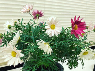 テーブルの上に鉢植えの花 - No.1009371
