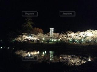 夜桜 - No.1013099
