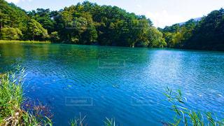 木々 に囲まれた水の大きな体 - No.1016965