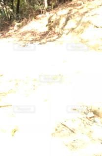 森の妖精⁈の写真・画像素材[1021225]