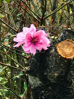 花のアップの写真・画像素材[1114981]