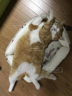 木製の床の上に座っている猫の写真・画像素材[1188156]
