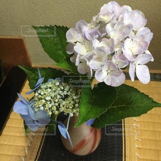 紫陽花の写真・画像素材[1004228]