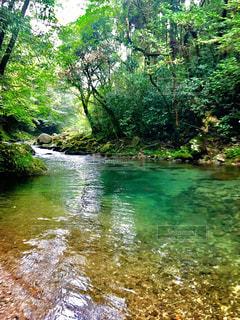 渓流の写真・画像素材[1027261]