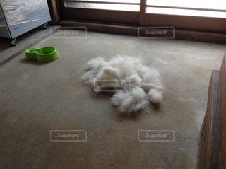 犬の抜け毛の写真・画像素材[1006158]