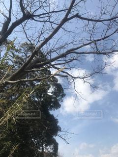 森の大きな木の写真・画像素材[1007703]
