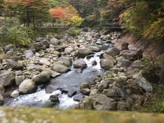 紅葉と河川の写真・画像素材[1004881]