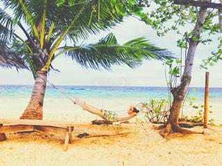 ヤシの木とビーチの写真・画像素材[1005141]