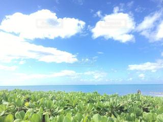 広い空、青い海、緑の写真・画像素材[1006718]