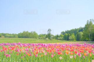 お花畑の写真・画像素材[1227998]