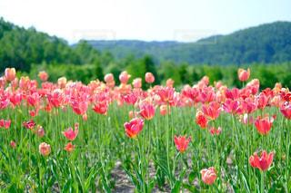 お花畑の写真・画像素材[1228709]