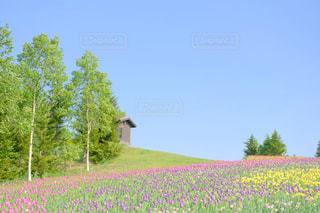 一面の花畑の写真・画像素材[1228712]