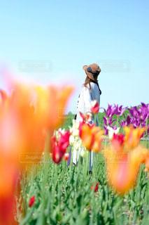 花と人の写真・画像素材[1245713]