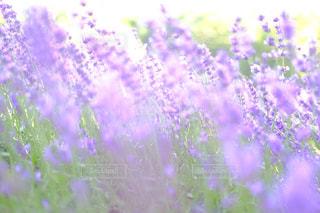 近くの花のアップの写真・画像素材[1328372]