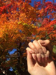 木の近くでの写真・画像素材[2710077]