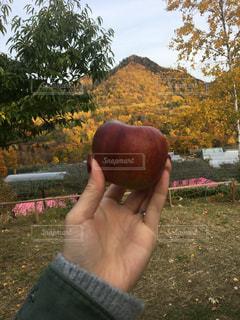 公園でリンゴを握る手の写真・画像素材[2846150]