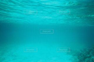 水面下の写真・画像素材[1005367]